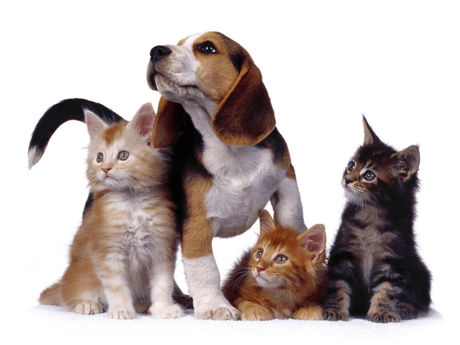 Документы для открытия ветеринарной клинки